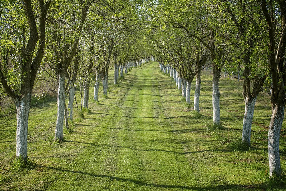 Fruit Trees of BC