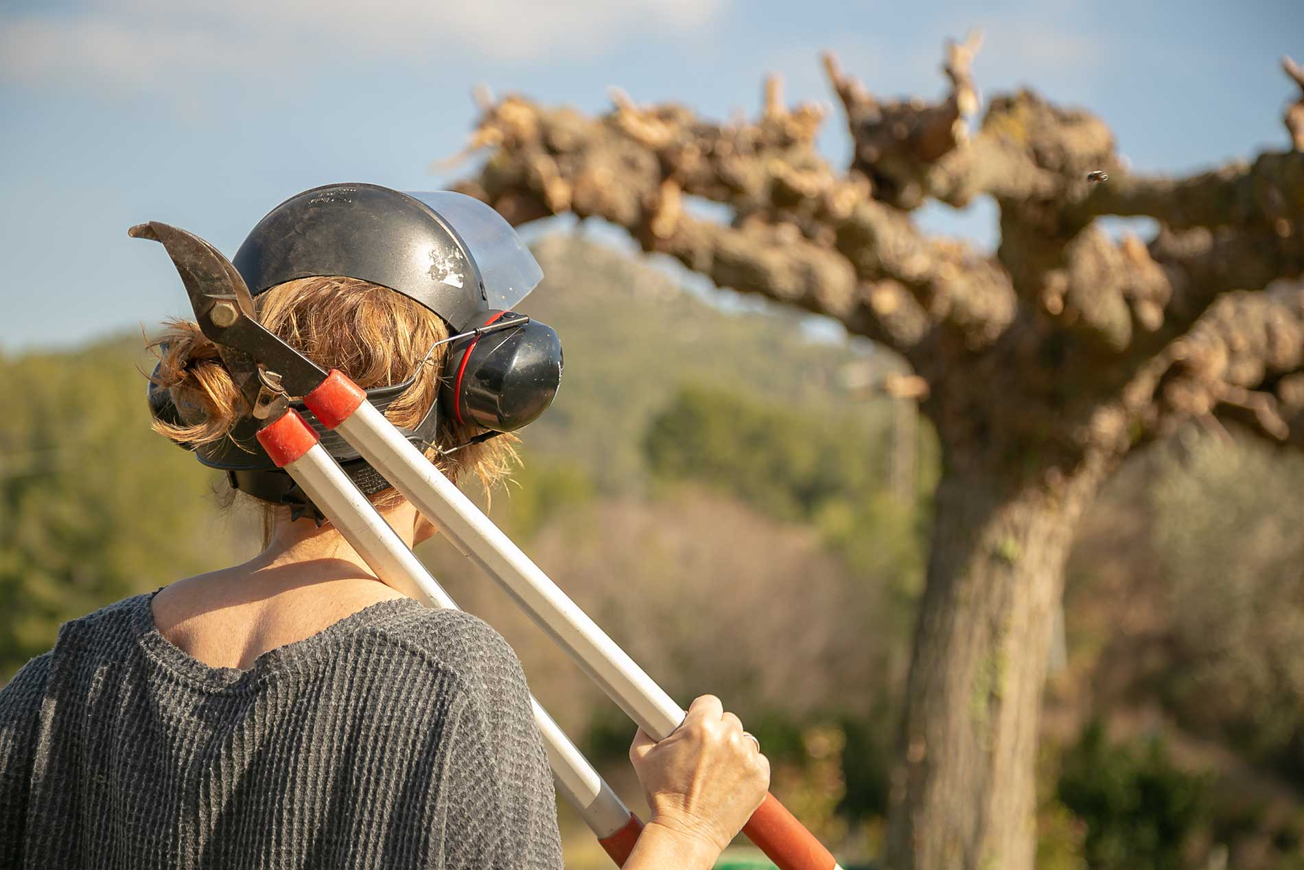 Become-a-Certified-Arborist-pinevalleytreeservices
