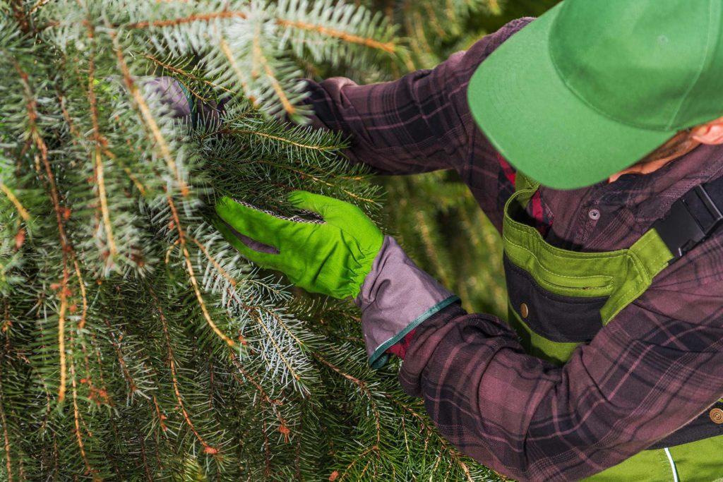 Hazardous-tree-removal