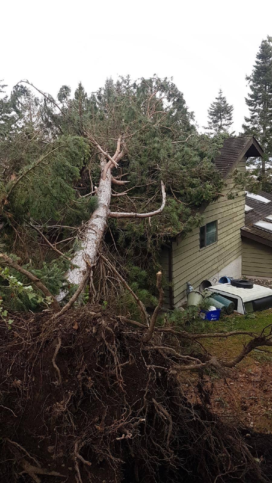 Storm & Pre-Storm Damage