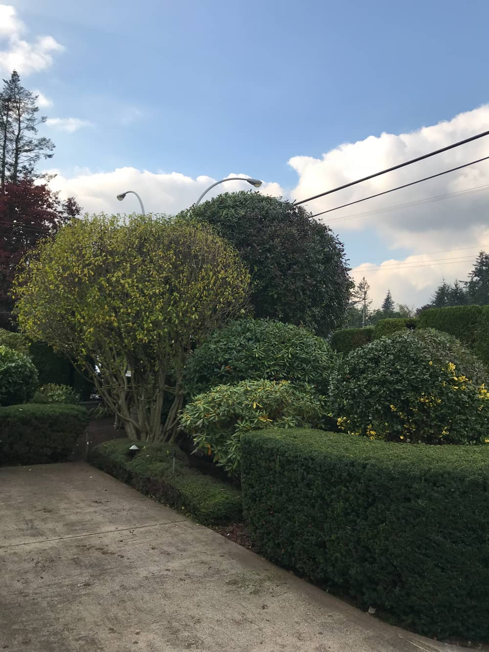 Trimming and Shaping Hedges