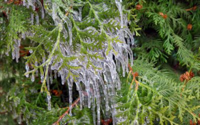 How to protect your trees and shrubs through winter