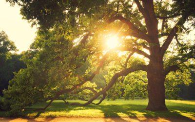 Love those shade trees!