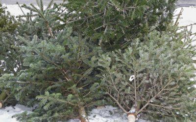 Eco-Disposal of Christmas Trees