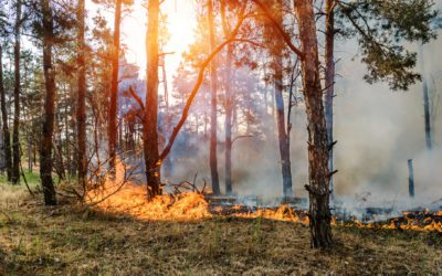 Fire-Smart Tips: How to Protect Your Home from Wildfires