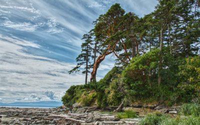 Endangered Tree Species in BC