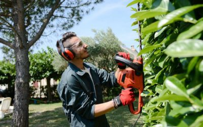 Spring Tree and Landscaping Services