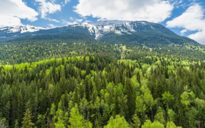 How Trees Filter Air