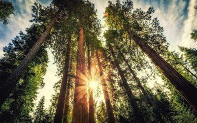 How long do trees live?
