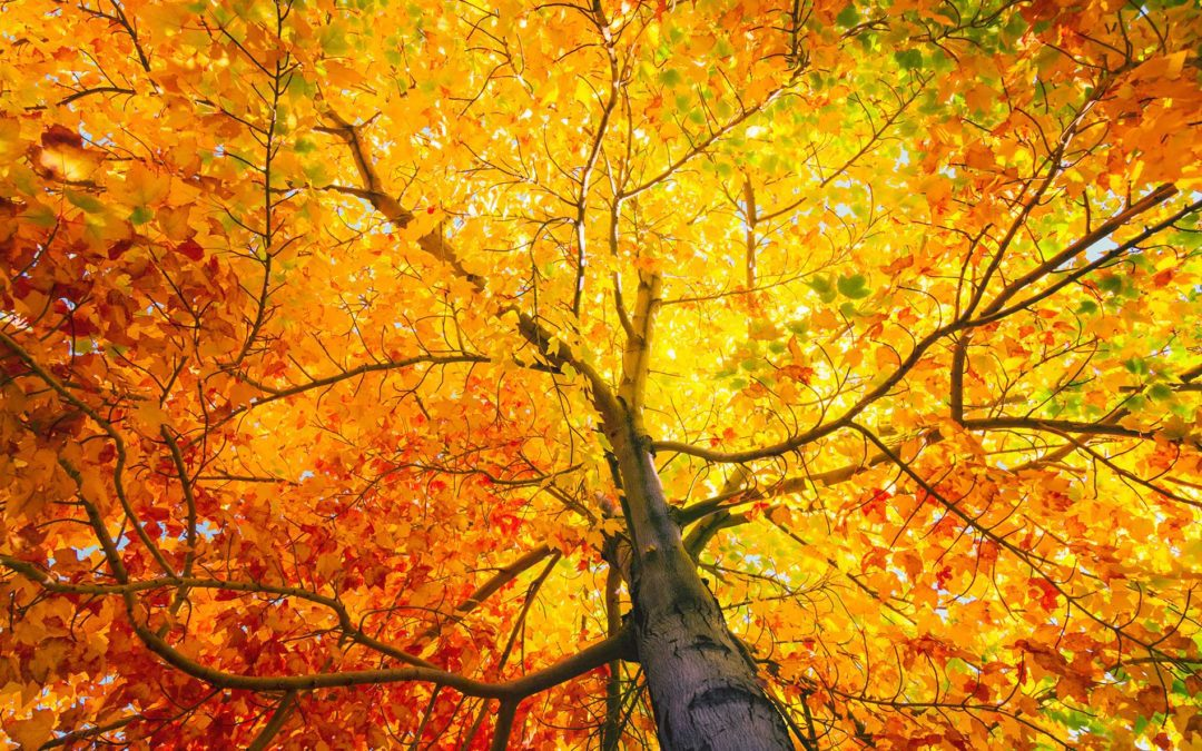 featuredimage-Our-Fall-Tree-Services