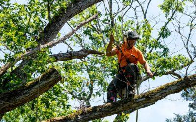 Seasonal Tree Care – Summer Checklist