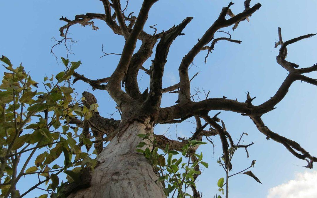 featuredimage-When-to-remove-a-hazardous-tree