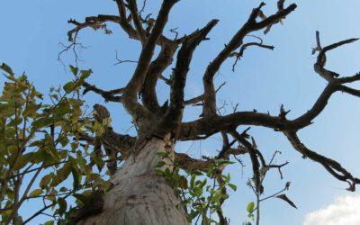 When to remove a hazardous tree