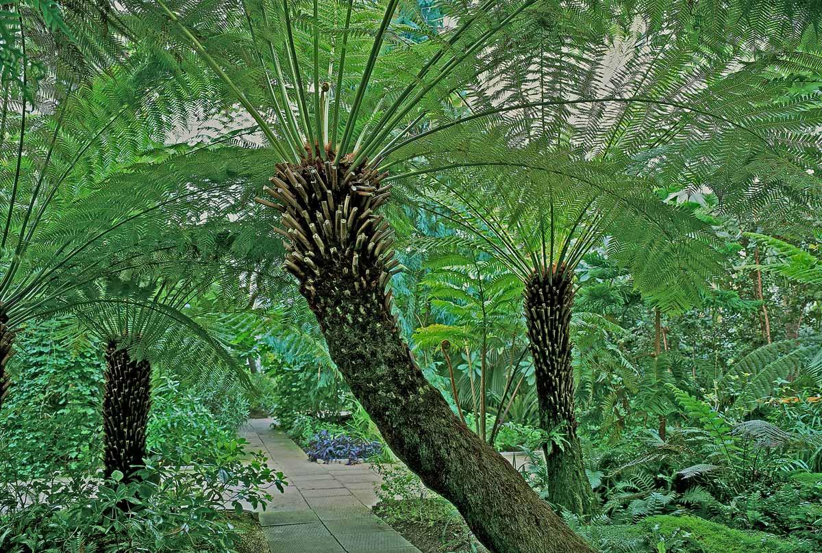 image-4-Tree-Ferns-v2