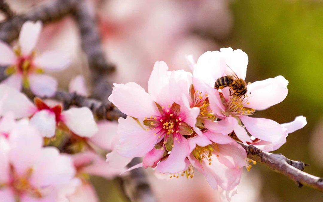 trees-need-Pollinators