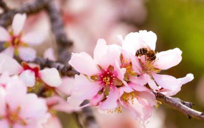 Trees Need Pollinators